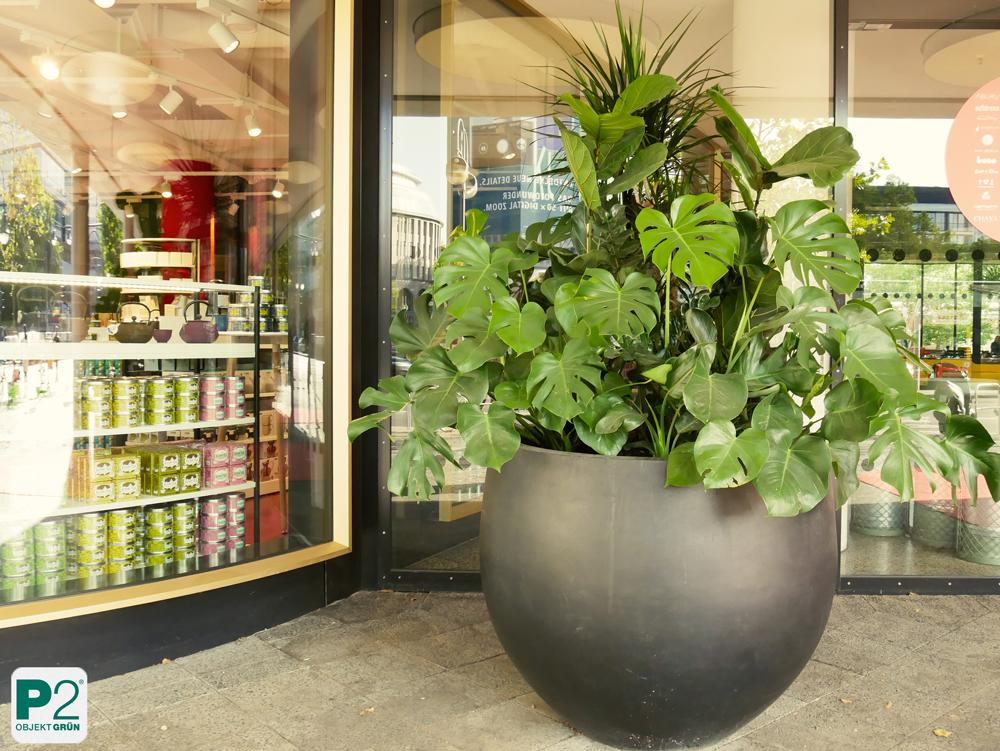 Bikini Berlin Kunstpflanzen & Zimmerpflanzen im Eingangsbereich